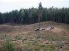Esam Latvijas valsts mežu cirsmā