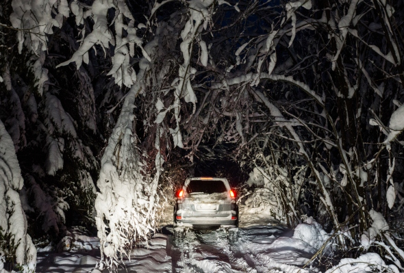 Nakts mežā